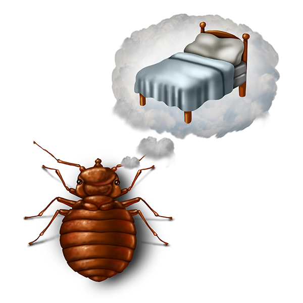 Bed Bug Inspection And Removal American Pest Control Troy Mi